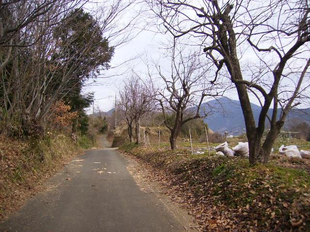 坂本古道08