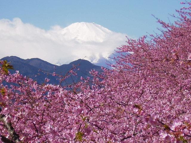 富士と桜64