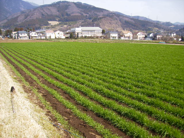 麦畑108