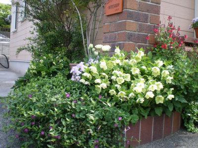 2011春 花壇