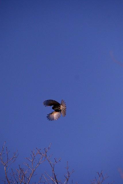 飛んでる鳥