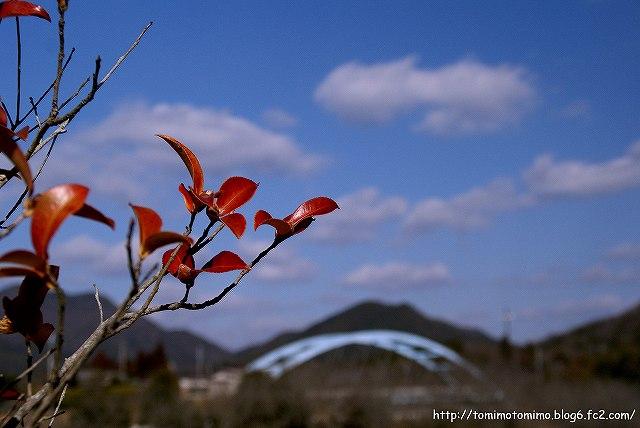 葉っぱと空-2