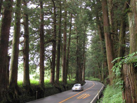 会津西街道杉並木