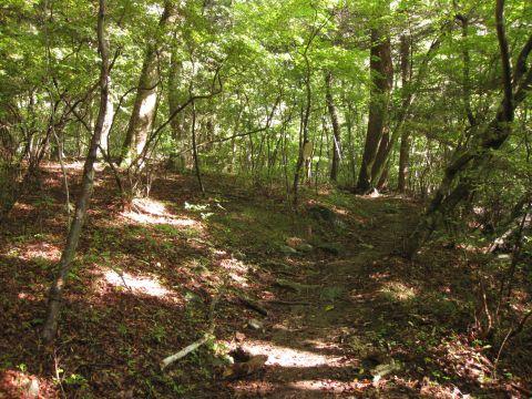 白岩半島の遊歩道