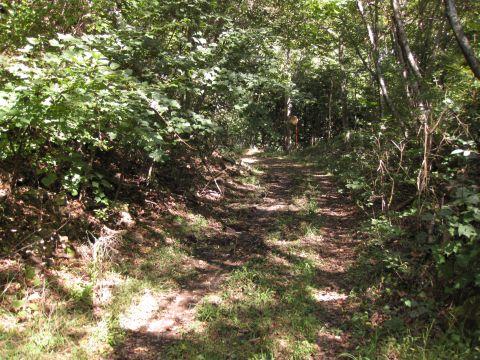 森林管理署専用道