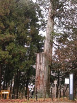 熊野堂のサワラ