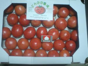 tomato 5kg