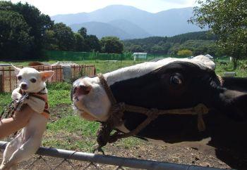 畜産フェア2