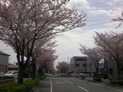 0414sakura