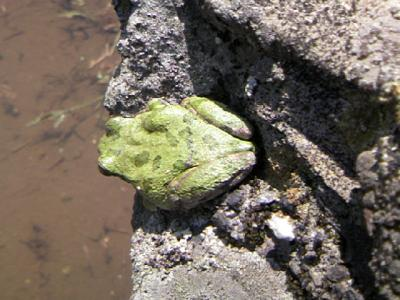 0516雨蛙