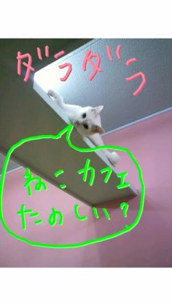 2011053000460000_convert_20110530175808.jpg