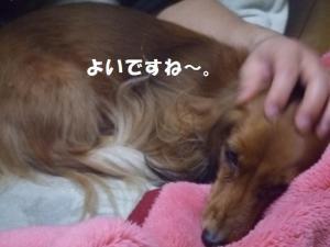 007_20081207203100.jpg