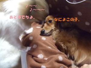 178_20090110205545.jpg