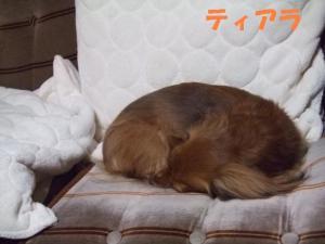 2008 12 jikka 001