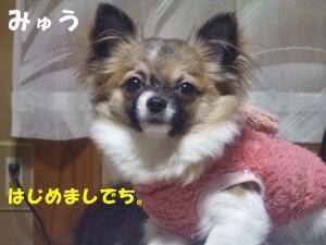 2008 12 jikka 004