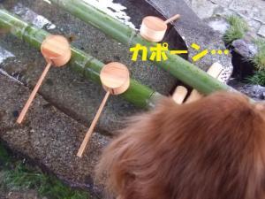 212_20090105214227.jpg