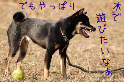 20081123-189_20081126203030.jpg