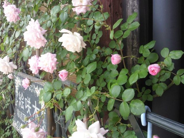 moblog_011100a2.jpg