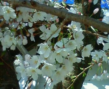 moblog_61966a62.jpg