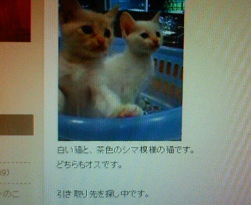 moblog_d9839a6a.jpg