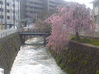 sakurakawa.jpg
