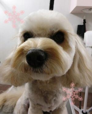 iphone_20120126160437.jpg