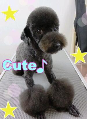 rakugaki_20120225_0006.jpeg