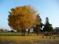 091201_いい紅葉シーズン