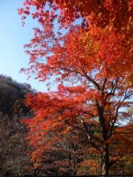 伊香保の紅葉