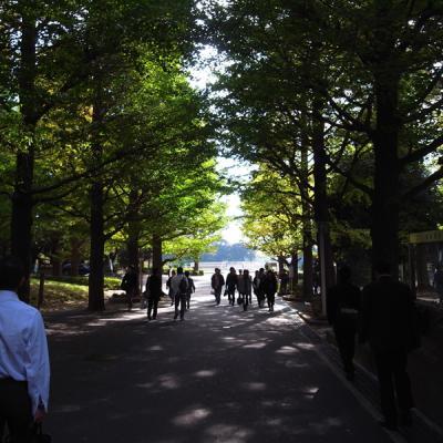 091104_keio_namiki.jpg
