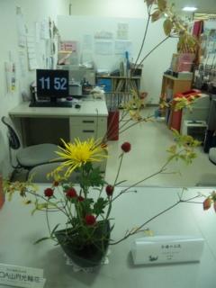 11月4日のお花