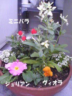 寄せ植え用お花1