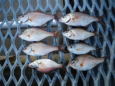 午後の釣果