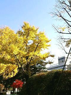 県庁前公園1126-1
