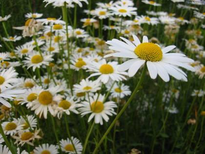 flower1006-3.jpg