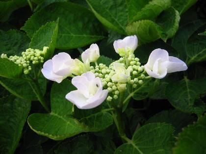 flower1006-7.jpg