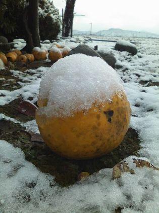 snow091215-01.jpg