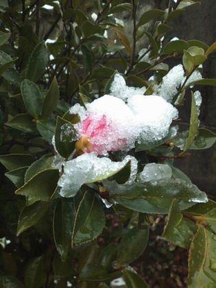 snow091215-02.jpg