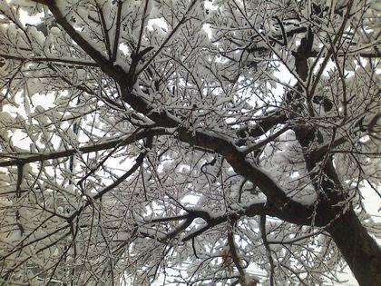 snow091217-04.jpg