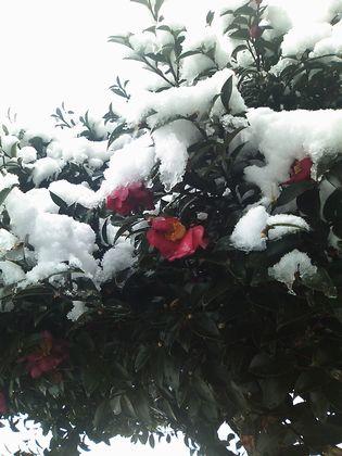 snow100103.jpg