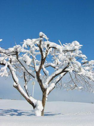 snow100116.jpg