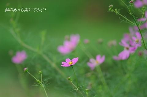 IMGP3210.jpg