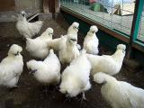 のびのび広~い平飼いの鶏舎