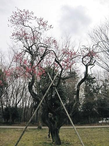 2012草花木013