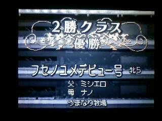 ユメデビュー_2勝クラス_081229