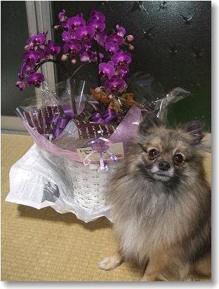 お花と梅吉