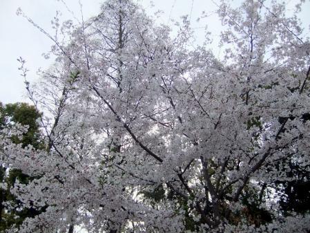 2011_0410ブログ0043