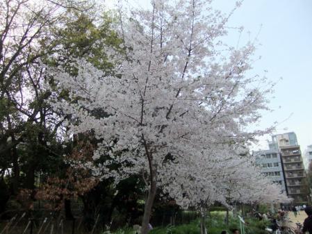 2011_0410ブログ0041
