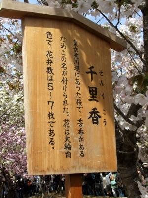 2011_0417ブログ0035