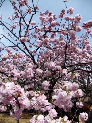 2011_0417ブログ0059